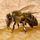 Стильный браслет 19 см на руку мужской 11 сегментов силуэт пчелы и клешней